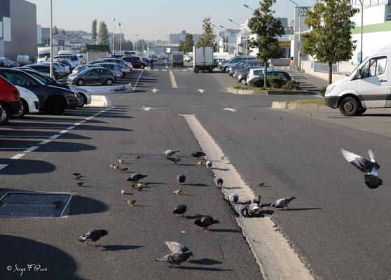 Le repas des oiseaux - Marché International de Rungis - France (Octobre 2012)