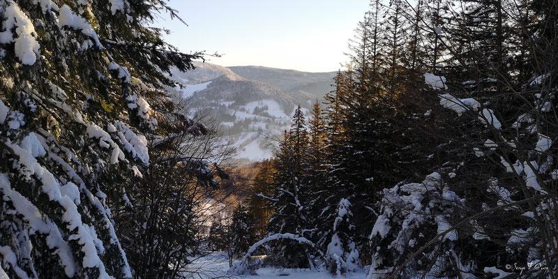 Le chemin de la sapinière à Murat le Quaire - Massif du Sancy - Auvergne - France