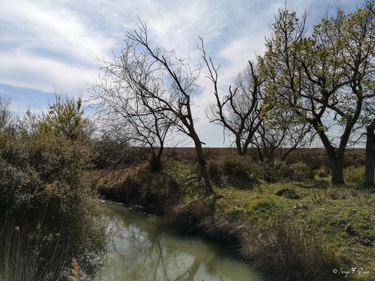 Aux à côtés du château Tourvieille - Réserve Naturelle Nationale de Camargue - Les Saintes Maries de la Mer - Camargue - Bouches du Rhône - France