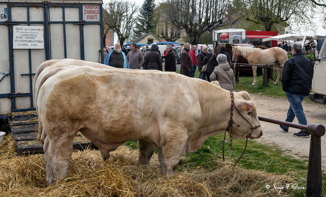 Foire de Giat (les bestiaux) - Auvergne - France (2017)