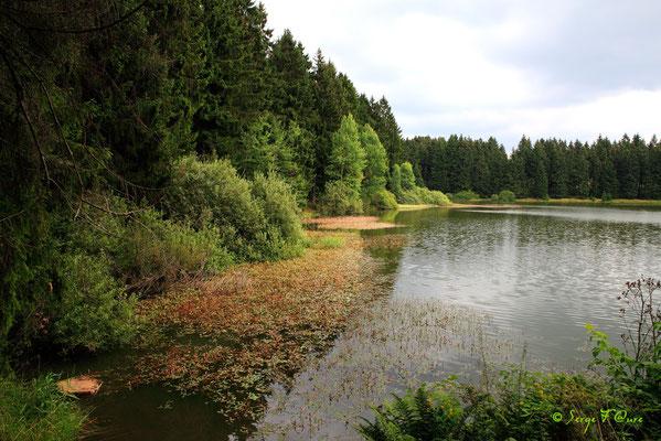 Le Harz (Allemagne) Août 2010
