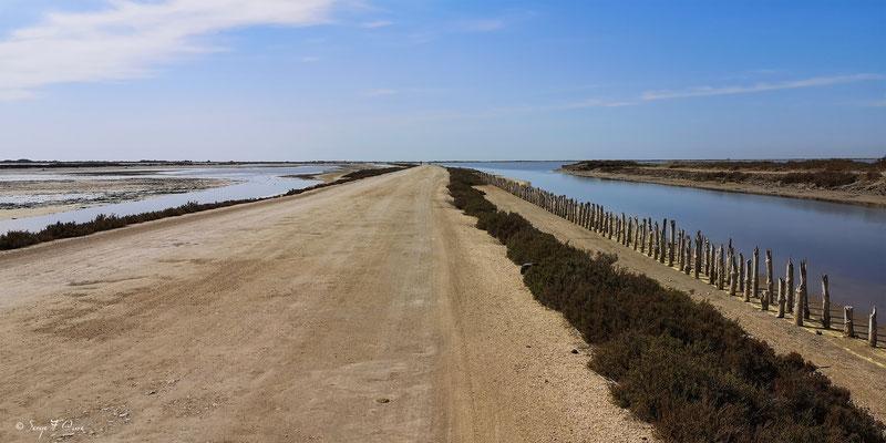 Chemin entre mer et mer - Réserve Naturelle Nationale de Camargue - Les Saintes Maries de la Mer - Camargue - Bouches du Rhône - France