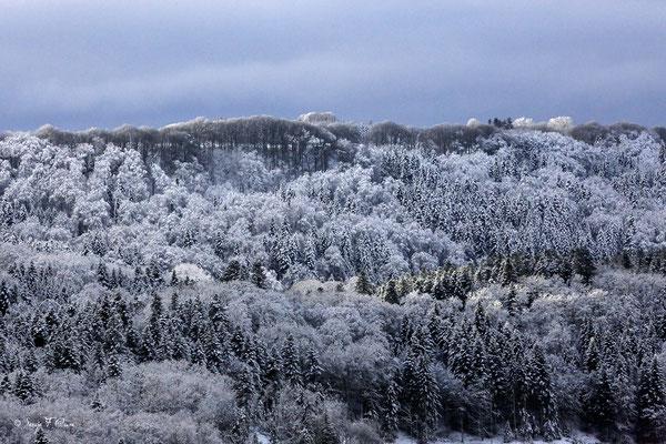 Soleil et neige sur le plateau de Charlannes - Massif du Sancy - Auvergne - France