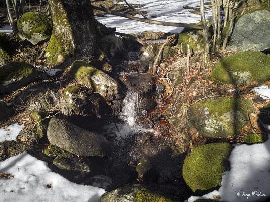 Le ruisseau de la Vernouze vers l'Usclade - Murat le Quaire - Massif du Sancy - Auvergne - France