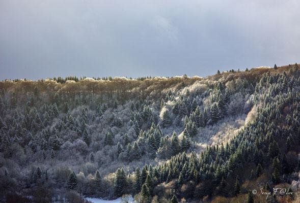 Paysage de neige - Massif du Sancy - Auvergne - France