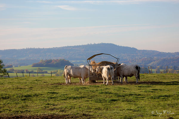 Au gré des champs à St Martin de Tours dans le massif du Sancy - Auvergne - France