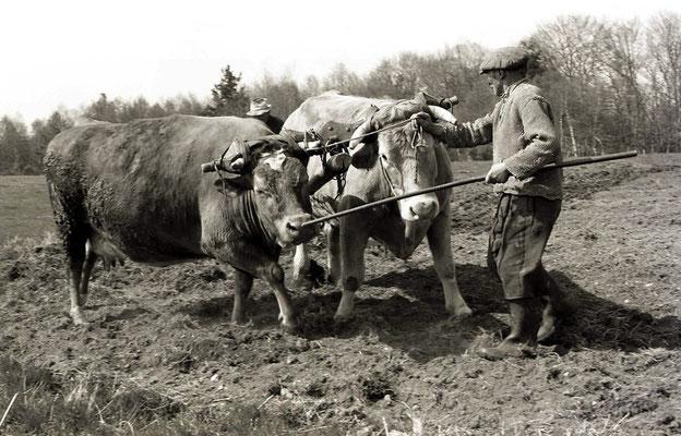Paysans au champ - Le passage de la herse - Auvergne (1978)