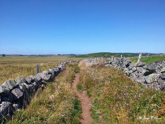 En allant vers Nasbinals - France - Sur le chemin de St Jacques de Compostelle (santiago de compostela) - Le Chemin du Puy ou Via Podiensis (variante par Rocamadour)