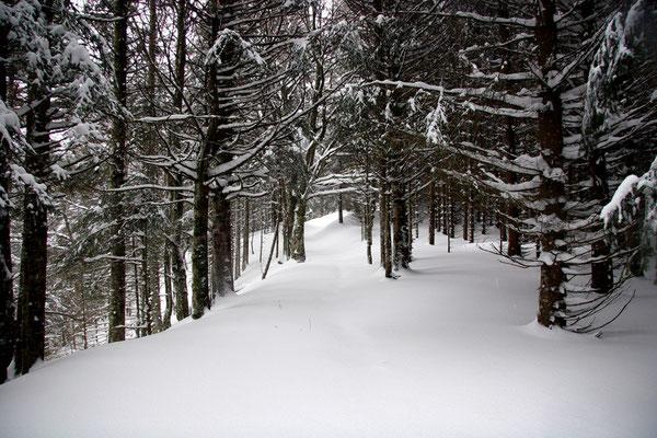 Paysage de neige-Le Mont Dore (Auvergne) Décembre 2005