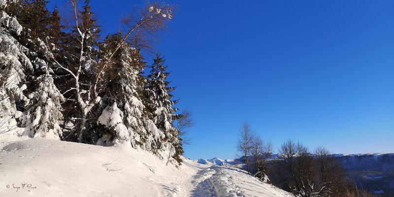 Vue sur le Puy de Sancy du chemin  de la sapinière à Murat le Quaire - Massif du Sancy - Auvergne - France
