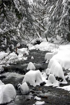 Le Rossignolet-Le Mont Dore (Auvergne) Février 2005