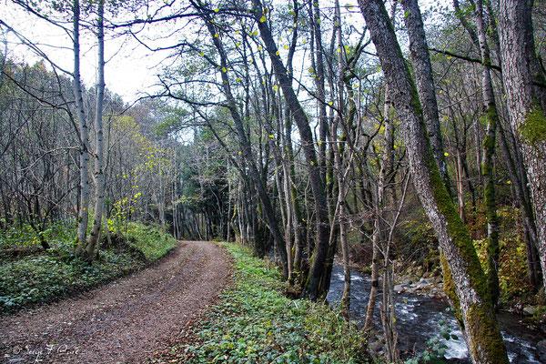 Chemin de la source Gabriel le long de la Dordogne - Le  Mont Dore - Massif du Sancy - Auvergne - France