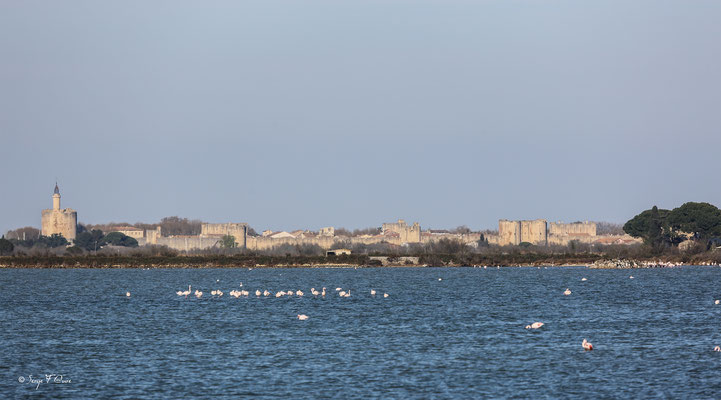 Façade de l'enceinte fortifiée d'Aigues Mortes