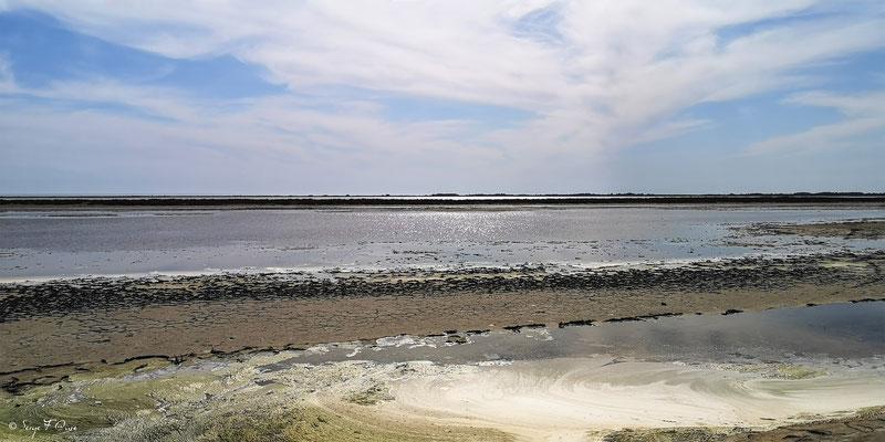 Paysage dans la Réserve Naturelle Nationale de Camargue - Les Saintes Maries de la Mer - Camargue - Bouches du Rhône - France