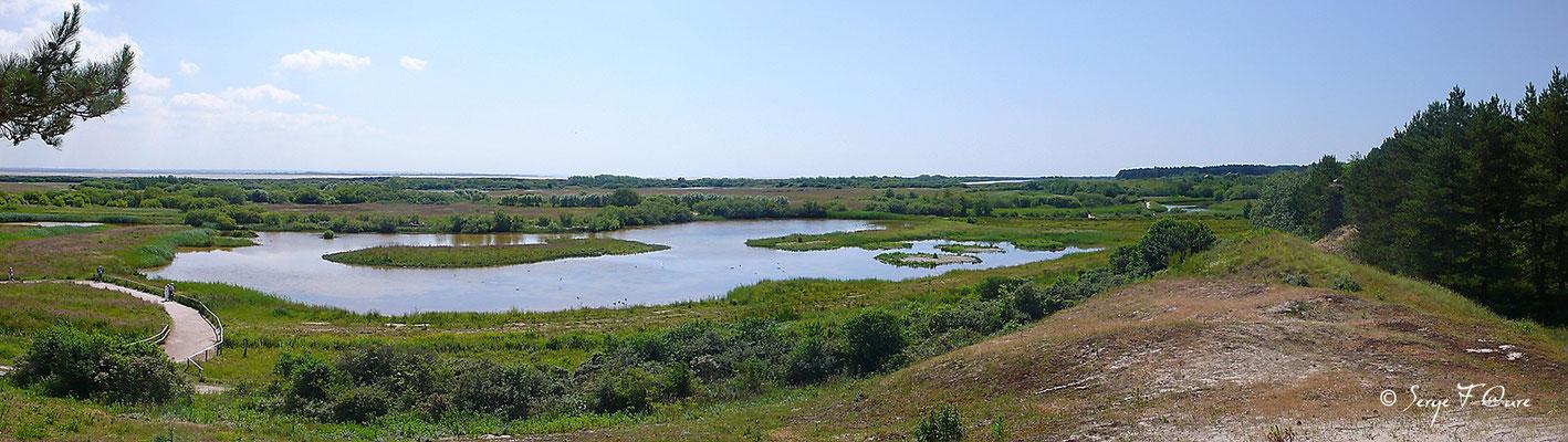 Parc ornithologique du Marquenterre - St Quentin en Tourmon - Baie de Somme - Picardie - France