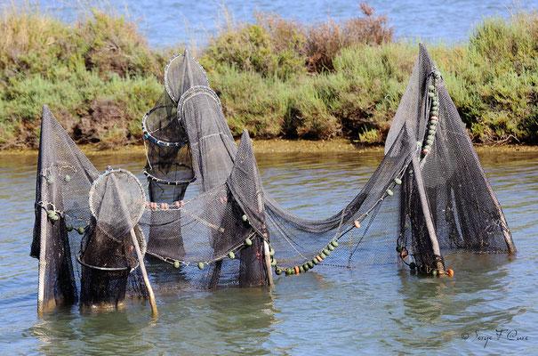 Filets de pêcheur - Anciens marais à la Sansouïre (Frontignan - Hérault - France)