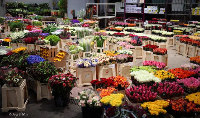 Halles aux fleurs - Marché International de Rungis - France (Octobre 2012)