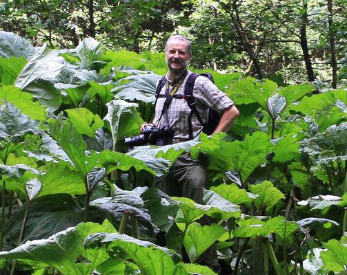 Raymond, mon frère perdu au milieu de la rhubarbe géante, gunnère du Brésil-Gunnera Manicata - Le Harz - Allemagne - (le véritable pays des sorcières