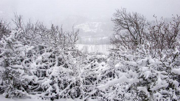 Paysage enneigé à Murat le Quaire - Massif du Sancy - Auvergne - France