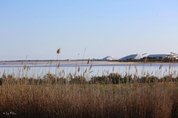 Les marais salants d'Aigues Mortes