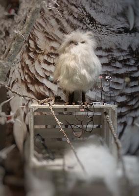 Blickfang mit Schneeeule