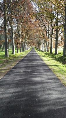 Chemin en enrobé noir sans bordures - TTA