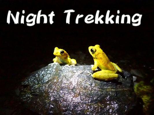 ナイトハイクツアー night trekking