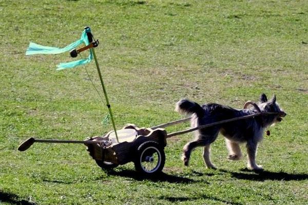 Ein Freund und Helfer beim golfen