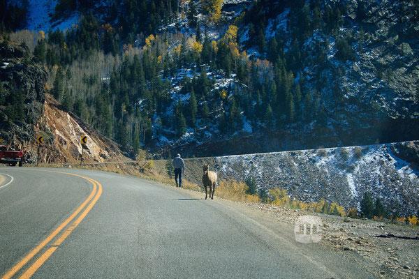 Wildlife on the Million Dollar Highway