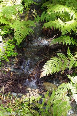 Glacier Nationalpark - Hemlock Grove Boardwalk Trail