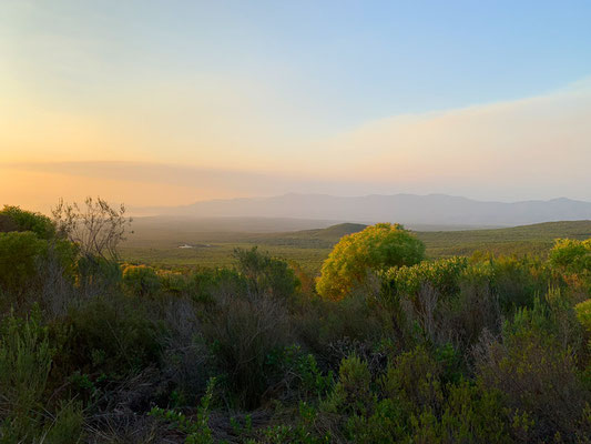 Fynbos im Grotbos private Nature Reservat - (C) www.gindeslebens.com