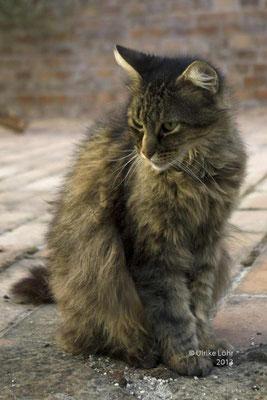 Locanda Katze