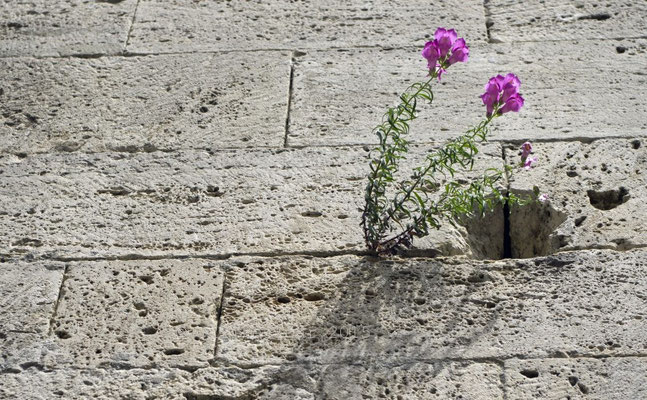 Detail San Francesco, Ascoli Piceno
