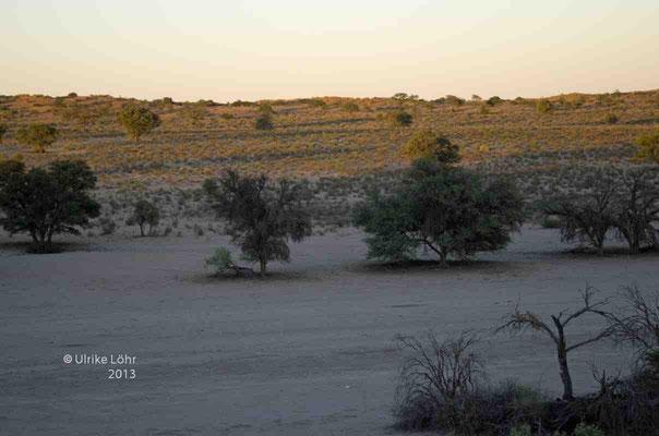 Blick vom Kalahari Tented Camp