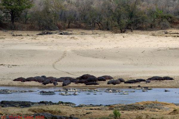 Flusspferde beim N'wamanzi Lookout
