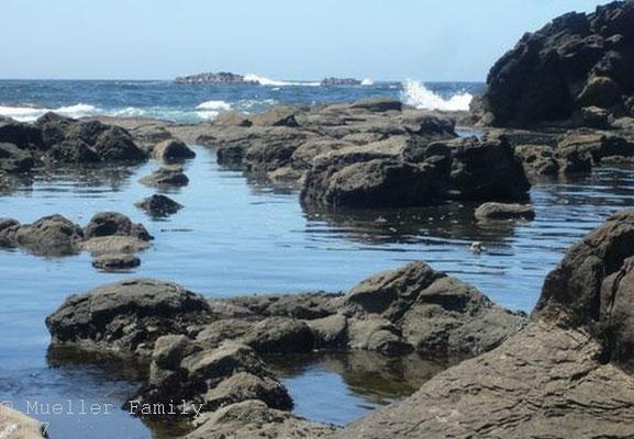 Seelöwen hinten auf den Inseln