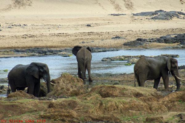 Drei Elefanten im Olifants beim N'wamanzi Lookout