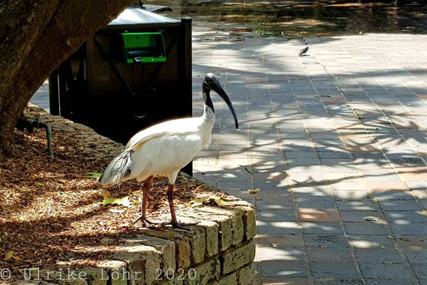 Ibis in Kings Cross