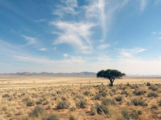 Namibia - (C) Ferngeweht