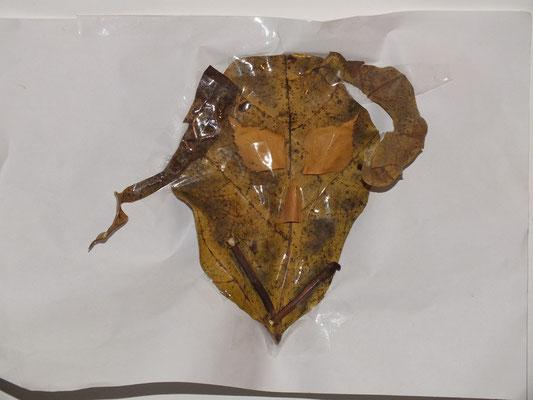 tête de monstre en feuilles morte et scotch