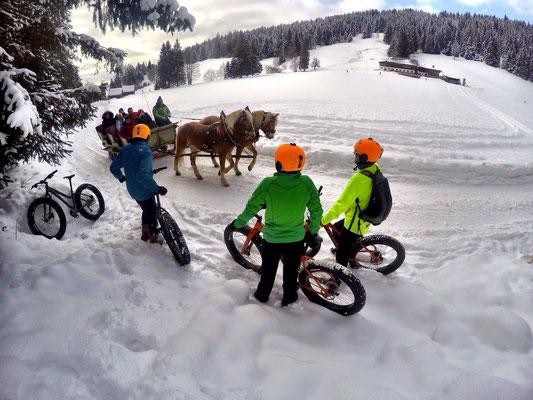 Alpine Fatbike horse Sledge