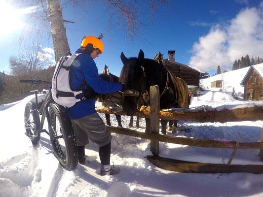 Alpine Fatbike Halseralm Horse