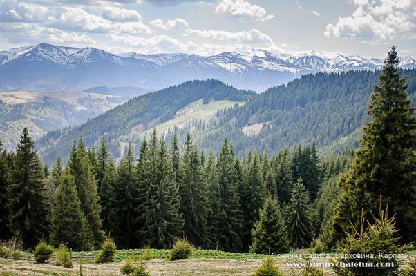 Карпати в травні. Хребет Кострича, краєвид на Чорногірський хребет.