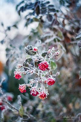 Сонячна садиба, Верховина, Карпати. Зимовий сад
