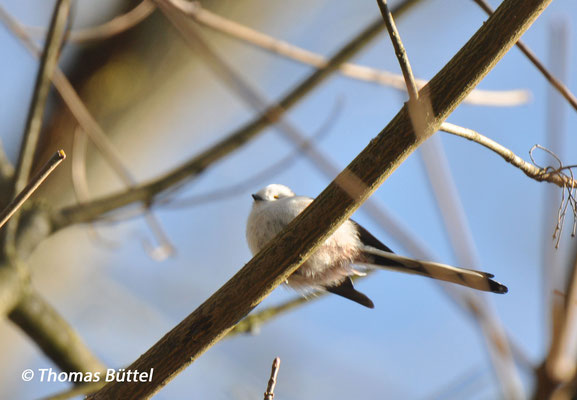 Typ CC (?) - bereits erwähnter Vogel, leider unscharfes Bild und nur von unten gesehen