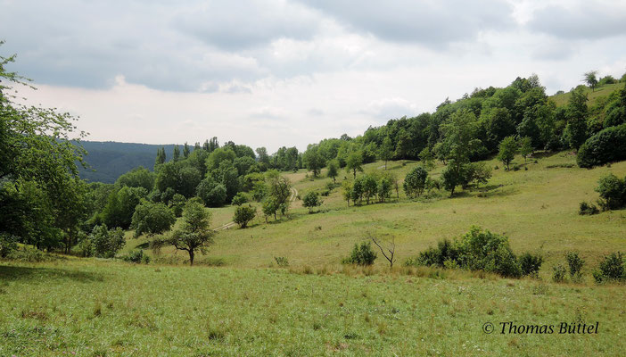 Slopes of the Staffelberg