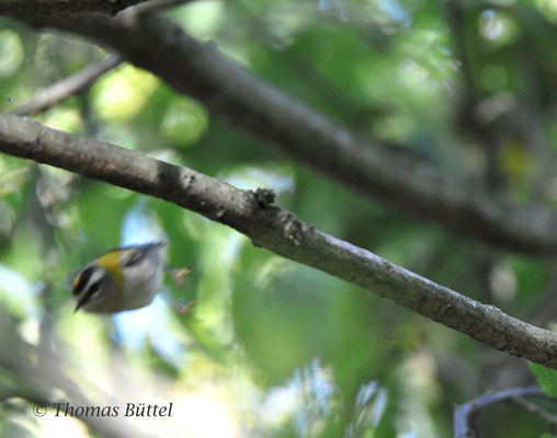... too late (Firecrest)