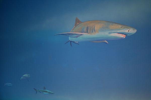 Wandmalerei mit Schwarzspitzenriffhai im indischen Ozean