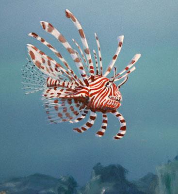 Detailbild: Rotfeuerfisch.