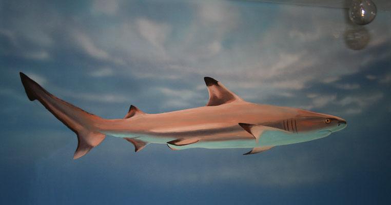 Bilder von gefährlichen Haien zieren die Wände...